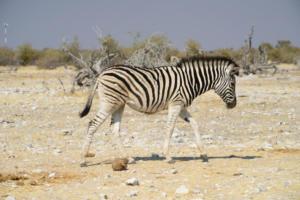 Namibia-380