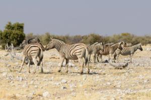 Namibia-384