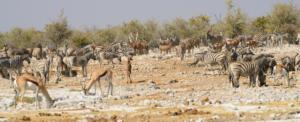 Namibia-385