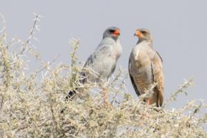 Namibia-387