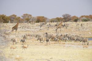 Namibia-388