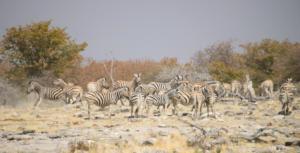 Namibia-391