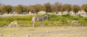 Namibia-396