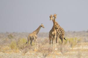 Namibia-397