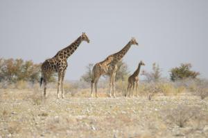 Namibia-398