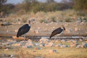 Namibia-399