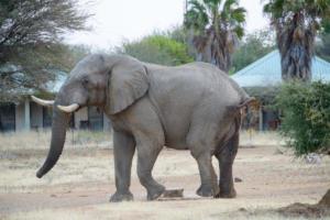 Namibia-409