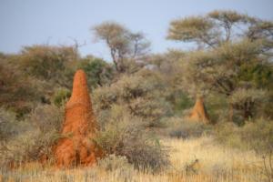 Namibia-418
