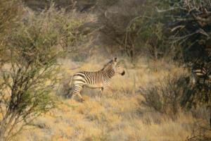 Namibia-422
