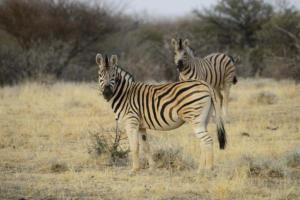 Namibia-425