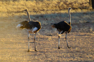 Namibia-07